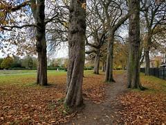 trees-one-plus-5t
