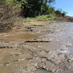 Lots of crocodiles in the Tempisque River