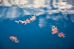 Floating Leaves: Luminar2018