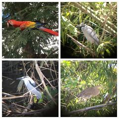 Palo Verde National Park, CR