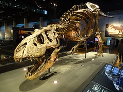 """Science Museum CosmoCaixa Barcelona • <a style=""""font-size:0.8em;"""" href=""""http://www.flickr.com/photos/160223425@N04/27031273789/"""" target=""""_blank"""">View on Flickr</a>"""