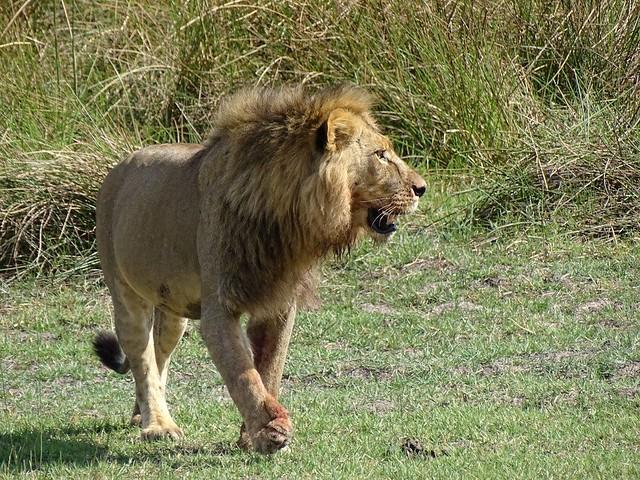 Botswana-Zuid Afrika