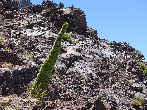 """La Palma • <a style=""""font-size:0.8em;"""" href=""""http://www.flickr.com/photos/160223425@N04/38855645331/"""" target=""""_blank"""">View on Flickr</a>"""