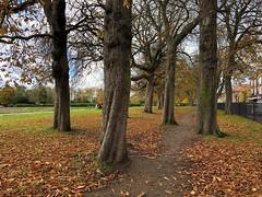 trees-iphone-x