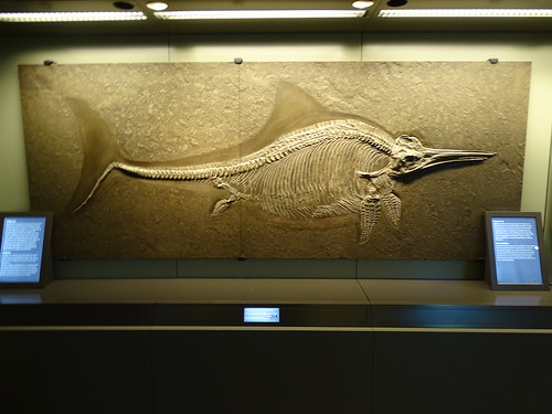 """Naturhistorisches Museum Wien • <a style=""""font-size:0.8em;"""" href=""""http://www.flickr.com/photos/160223425@N04/27035173149/"""" target=""""_blank"""">View on Flickr</a>"""