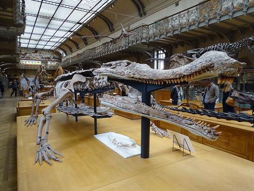 """Galerie de Paléontologie et d'Anatomie comparée Paris • <a style=""""font-size:0.8em;"""" href=""""http://www.flickr.com/photos/160223425@N04/37970295435/"""" target=""""_blank"""">View on Flickr</a>"""