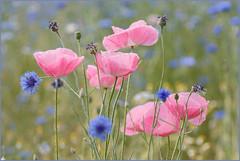 Thema bloemen _MG_0767