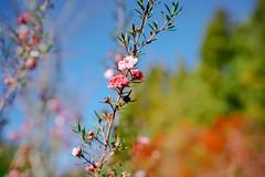 高山上的小花