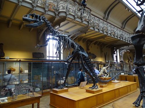 """Galerie de Paléontologie et d'Anatomie comparée Paris • <a style=""""font-size:0.8em;"""" href=""""http://www.flickr.com/photos/160223425@N04/38141478764/"""" target=""""_blank"""">View on Flickr</a>"""