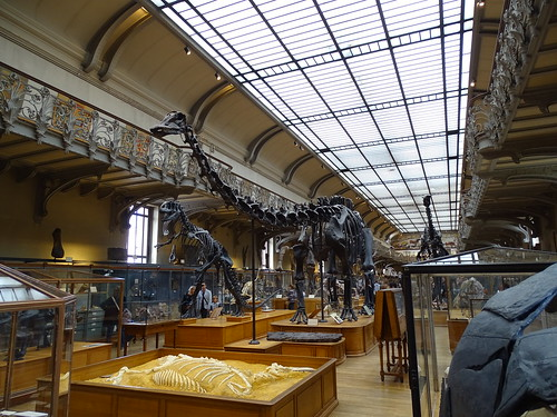 """Galerie de Paléontologie et d'Anatomie comparée Paris • <a style=""""font-size:0.8em;"""" href=""""http://www.flickr.com/photos/160223425@N04/38141485244/"""" target=""""_blank"""">View on Flickr</a>"""