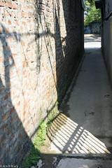 Vườn cúc treo