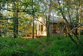 Umkhumbi Lodge: room in the forest pic Roger de la Harpe