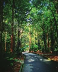 https://www.google.com/maps/place/2%C2%B016'54.2%22N+102%C2%B018'01.5%22E/@2.281731,102.300411,17z?hl=zh&gl=cn #green #nature #tree #grass #travel #holiday #holidayMalaysia #travelMalaysia #Asian #Malaysia #Malacca #大自然 #草 #树木 #旅行 #度假 #马来西亚旅行 #马来西亚度假 #亚洲