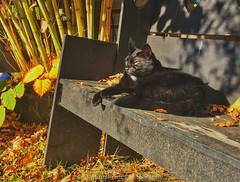 Wallace relaxing