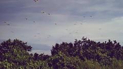#travel #holiday #Bird #tree #nature #Asian #Malaysia #Selangor #PantaiRemis #travelMalaysia #holidayMalaysia #旅行 #度假 #鸟儿 #树木 #大自然 #亚洲 #马来西亚 #雪兰莪 #马来西亚度假 #马来西亚旅行 #自游马来西亚