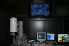 """Raster electron microscope • <a style=""""font-size:0.8em;"""" href=""""http://www.flickr.com/photos/160223425@N04/38878886782/"""" target=""""_blank"""">View on Flickr</a>"""