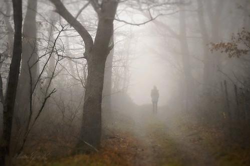 Sűrű köd / Dense fog
