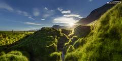 Meadows at the bottom of Vatnajökull