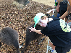 Petty kangaroos!