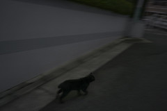 Black cat has broken out of the darkness.