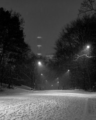 December night on East Drive Road. Central Park, NYC.