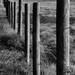 Staket / Fence Fotosöndag