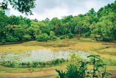 Taman Bukit S.U.K - Seksyen 6 - http://4sq.com/azZvYh #green #nature #tree #grass #travel #holiday #garden #holidayMalaysia #travelMalaysia #Asian #Malaysia #Selangor #Shahalam #大自然 #旅行 #度假 #马来西亚旅行 #马来西亚度假 #亚洲 #马来西亚 #发现马来西亚 #自游马来西亚 #雪兰莪 #花草树木 #公园
