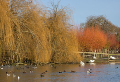 Winter Colour at Slimbridge WWT