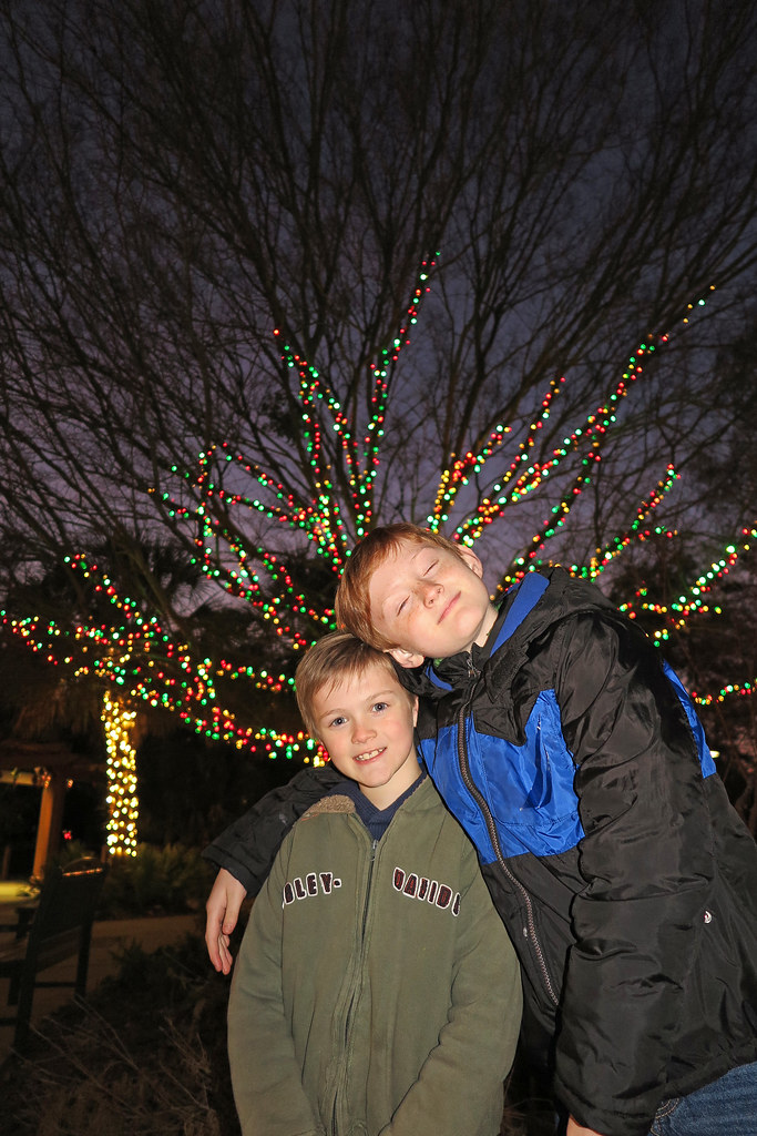 Christmas Lights Riverbanks Zoo
