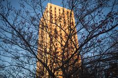 UKy Kirwan Blanding towers