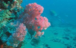 Constance Tsarabanjina diving corail pointes