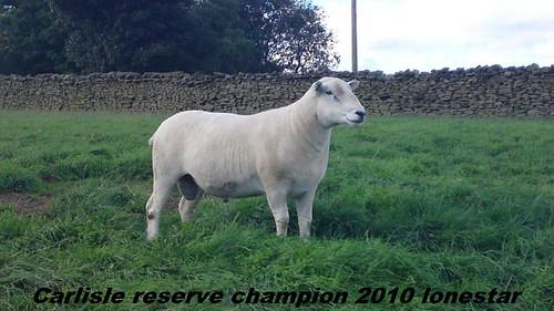 8.Carlisle reserve champion 2010-Blueboy
