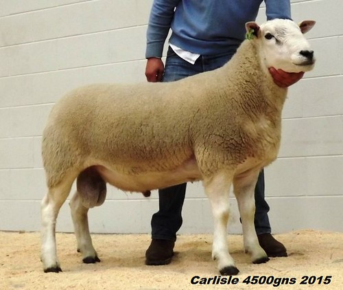 2.Carlisle 2015 Fort Dasher 4500gns