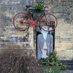 Druid Cycles