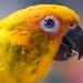 Strong beak