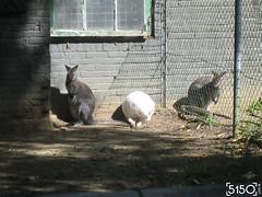 IMG_2568_Burgers_Zoo