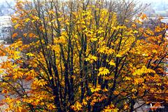 Fall colours 2018