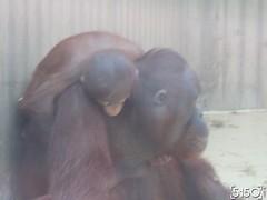 IMG_2638_Burgers_Zoo