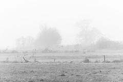 Misty Morning / Koksijde