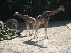 IMG_2488_Burgers_Zoo