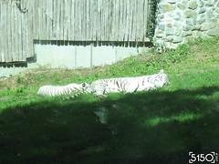 IMG_2691_Burgers_Zoo