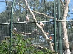 IMG_2485_Burgers_Zoo