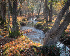 New Forest - Bratley Water-2 re-edit.jpg