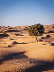 Sharjah Desert ii