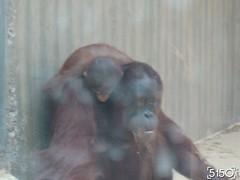 IMG_2637_Burgers_Zoo