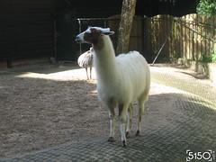 IMG_2543_Burgers_Zoo