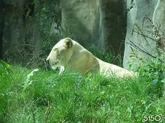 IMG_2701_Burgers_Zoo