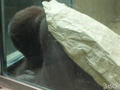 IMG_2632_Burgers_Zoo