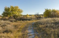Mesilla Bosque State Park, NM
