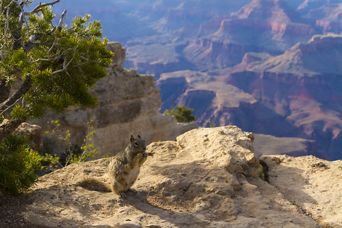 Squirrel at Grand Canyon